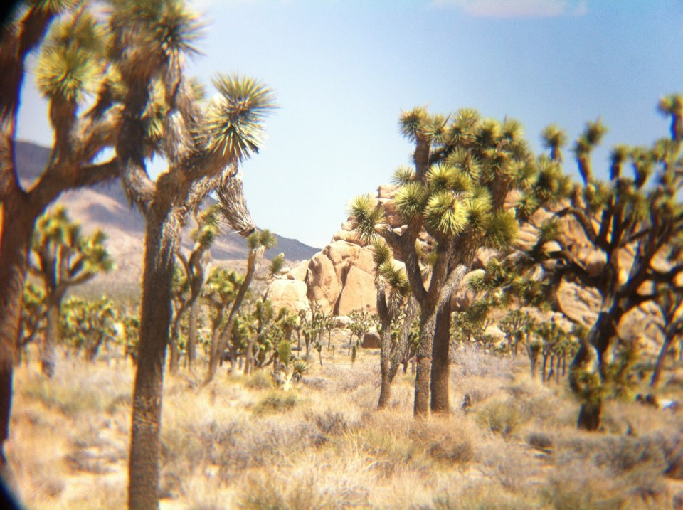 Joshua Tree National Park, near Palm Springs, California. (Credit: Kolby Solinsky)